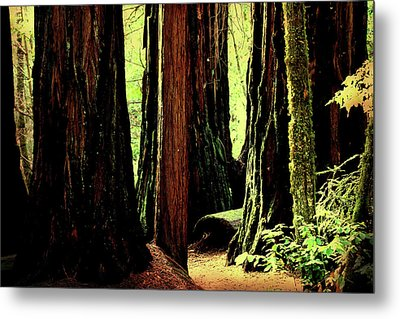 Path Through The Forest Edge . 7d5432 Metal Print by Wingsdomain Art and Photography