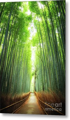 Pathway Through The Bamboo Grove Kyoto Metal Print