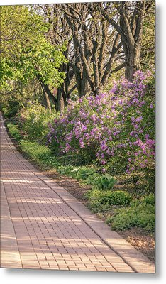 Pathway To Beauty In Lombard Metal Print by Joni Eskridge