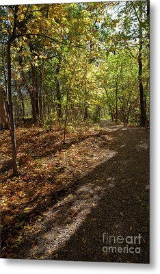 Metal Print featuring the photograph Pathways In Fall by Iris Greenwell