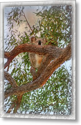 Metal Print featuring the photograph Patience Brings Koalas by Hanny Heim