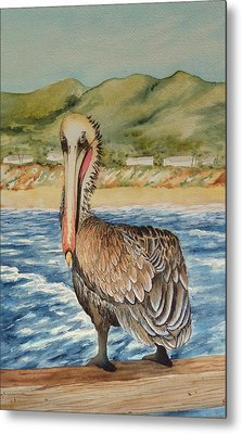 Paula's Pelican Metal Print by Katherine Young-Beck