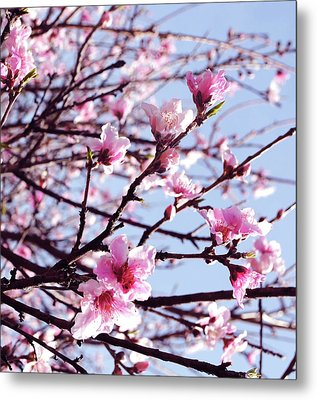 Peach Blossom Blowout Metal Print by DiDi Higginbotham
