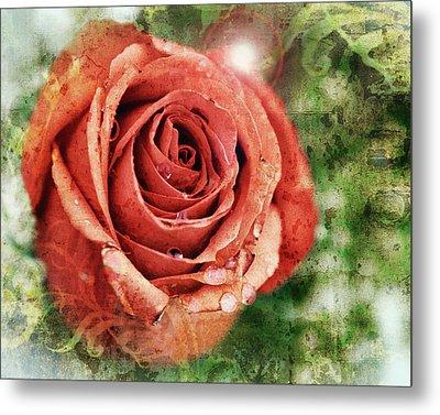 Peach Rose Metal Print by Sennie Pierson