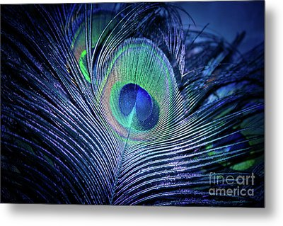 Metal Print featuring the photograph Peacock Feather Blush by Sharon Mau