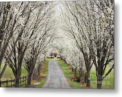 Metal Print featuring the photograph Pear Tree Lane by Benanne Stiens