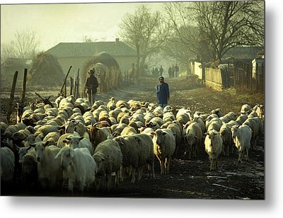 Peasants And Herd On The Village Path Metal Print by Emanuel Tanjala