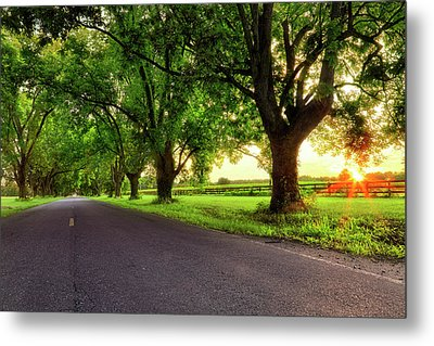Metal Print featuring the photograph Pecan Alley Sunrise - Scott Arkansas - Landscape by Jason Politte