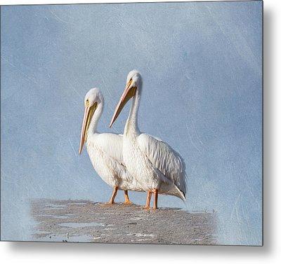 Metal Print featuring the photograph Pelican Duo by Kim Hojnacki