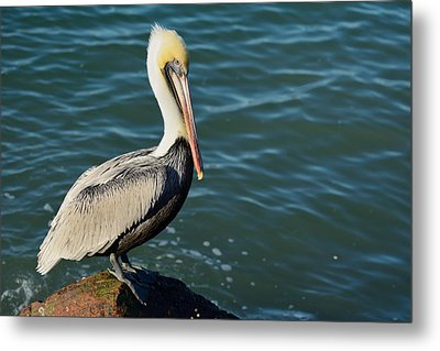 Metal Print featuring the photograph Pelican On A Rock by Bradford Martin