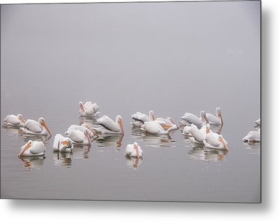 Pelicans On The Lake Metal Print by Carolyn Dalessandro
