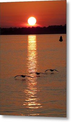 Pelican Sunset Metal Print by Dustin K Ryan