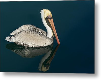 Metal Print featuring the photograph Pelican With Reflection by Bradford Martin