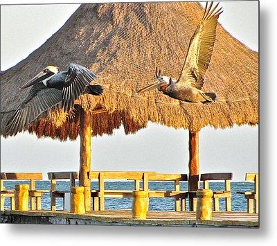 Pelicans In Flight Metal Print by Sean Griffin