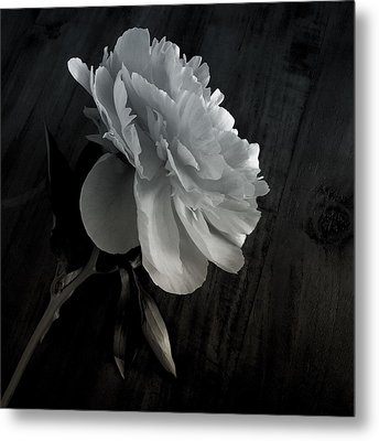 Metal Print featuring the photograph Peonie by Sharon Jones