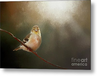 Metal Print featuring the photograph Perched Goldfinch by Darren Fisher