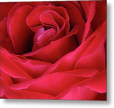 Perfect Petals Metal Print by Deborah Johnson