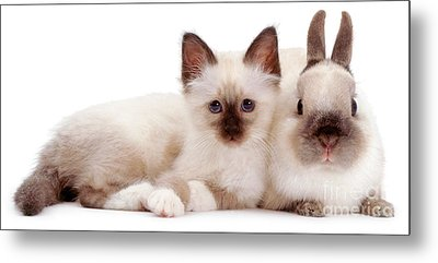 Perfectly Paired Pals Metal Print