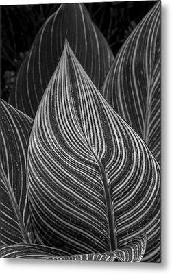 Perpetual Motion Metal Print