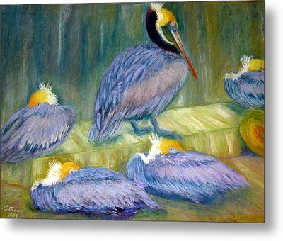 Metal Print featuring the pastel Peruvian Pelicans Two Pastel by Antonia Citrino