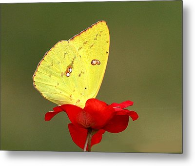Metal Print featuring the photograph Petals And Wings by Sheila Brown