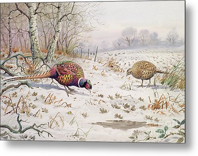Pheasant And Partridge Eating  Metal Print by Carl Donner
