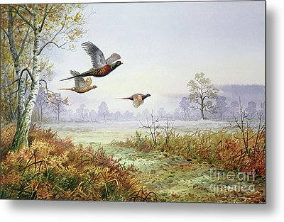 Pheasants In Flight  Metal Print by Carl Donner