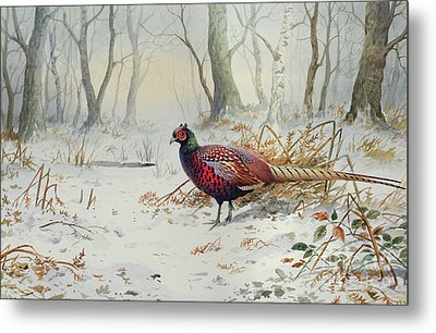 Pheasants In Snow Metal Print by Carl Donner