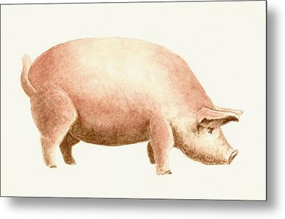 Pig Metal Print by Michael Vigliotti