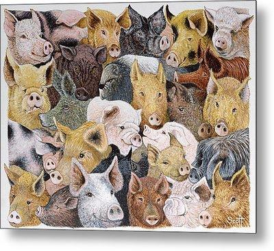 Pigs Galore Metal Print by Pat Scott