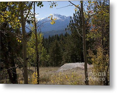 Metal Print featuring the photograph Pikes Peak Framed Aspens Landscape by Marta Alfred
