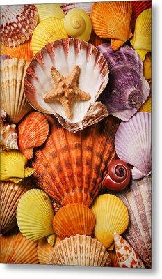 Pile Of Seashells Metal Print by Garry Gay