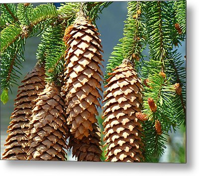 Pine Cones Art Prints Conifer Pine Tree Landscape Baslee Troutman Metal Print by Baslee Troutman