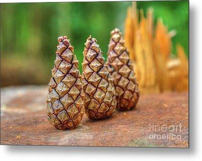 Pine Cones Metal Print by Veikko Suikkanen