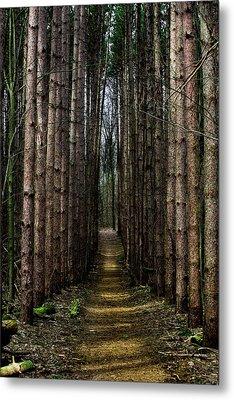 Pine Path  Metal Print