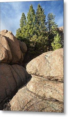 Pines In Granite Metal Print