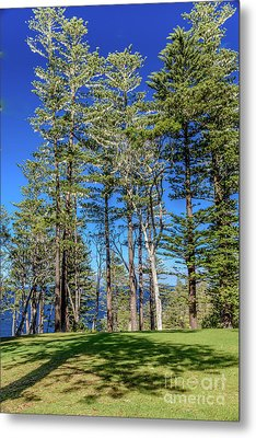 Metal Print featuring the photograph Pines by Werner Padarin