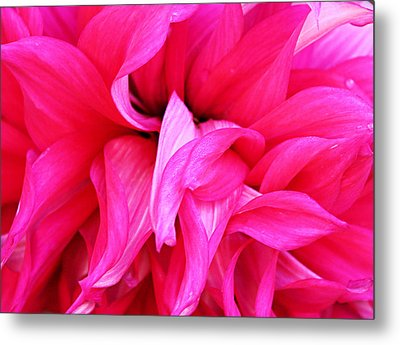 Metal Print featuring the photograph Pink Dahlia by Kristin Elmquist