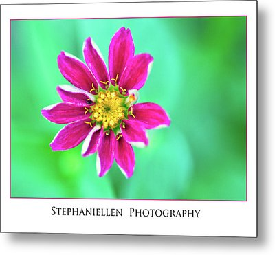 Pink Flower Metal Print by Stephanie Hayes