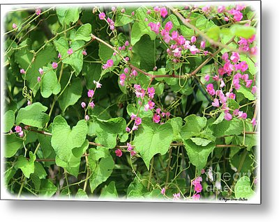 Metal Print featuring the photograph Pink Flowering Vine1 by Megan Dirsa-DuBois