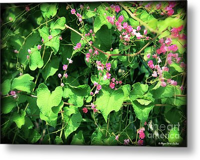 Metal Print featuring the photograph Pink Flowering Vine2 by Megan Dirsa-DuBois