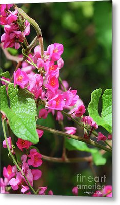 Metal Print featuring the photograph Pink Flowering Vine3 by Megan Dirsa-DuBois