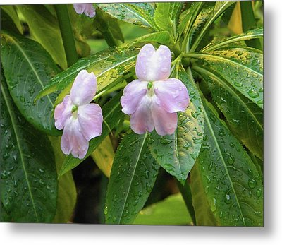 Metal Print featuring the photograph Pink Flowers Under The Rain by Manuela Constantin