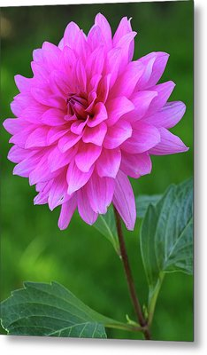Metal Print featuring the photograph Pink Garden Flower by Juergen Roth