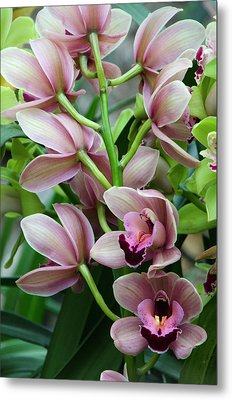 Pink Orchids 2 Metal Print by Ann Bridges