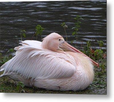 Pink Pelican Metal Print by Margaret Brooks