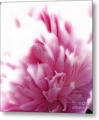 Pink Peony Metal Print by Addie Hocynec
