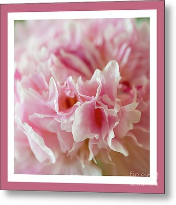 Metal Print featuring the photograph Pink Perfection by Wendy Wilton