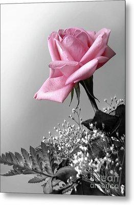 Pink Petals Metal Print by Carlos Caetano
