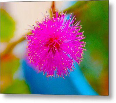 Pink Puff Flower Metal Print